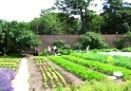 Picture - Brunswick Organic Nursery