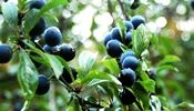 Picture - Sloe Motion